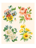 Four Flower Collections