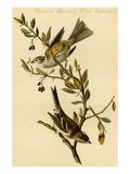 Canada Bunting Tree Sparrow