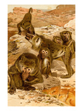Baboon Family