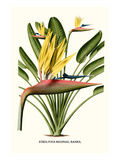 Yellow Bird of Paradise - Mandela's Gold