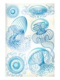Jelly Fish Reproduction d'art par Ernst Haeckel