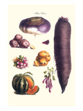 Vegetables; Melon  Potato  Carrot  Purple  Raddish