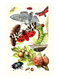 Green Oak Moth  Burnet Moth  Puss Moth  Tiger Moth  Ladybird Beetle