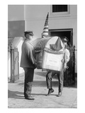 Harding Turkey Delivered to the White House