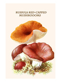 Russula Red-Capped Mushroooms