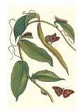 Flat-Leaved Vanila Plant with a Gulf Fritillary
