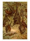Hanging Bats Reproduction d'art par F.W. Kuhnert