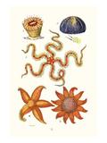 Common Madrepore Coral  Sea Urchin  Brittlestar  Sun Star