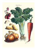 Vegetables; Celery  Strawberry  Onion  Carrot  and Potato