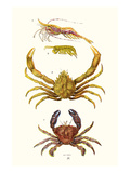Spider Crab  Sand Skipper  Prawn  Velvet Swimming Crab