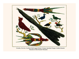 Grackle  Parrots  Cardinal  Red-Legged Honey Creeper  Speckled Tanger  Golden-Headed Manakin  etc