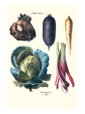 Vegetables; Rhubard  Tubers  and Cabbage