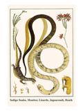 Indigo Snake  Monitor  Lizards  Jaguarondi  Heath