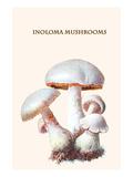 Inoloma Mushrooms