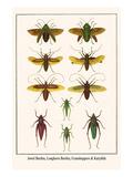Jewel Beetles  Longhorn Beetles  Grasshoppers and Katydids