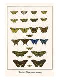 Butterflies  Mormons
