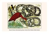 Royal Python  Reticulated Python  Scarlet Ibis  Rufous-Tailed Shama