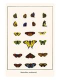 Butterflies  Swallowtail