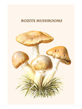 Rozite Mushrooms