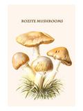 Rozite Mushrooms