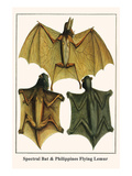Spectral Bat and Philippines Flying Lemur