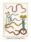 Snakes and Everlasting Flower