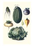 Vegetables; Melon  Turnip  Lettuce  Cabbage