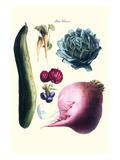 Vegetables; Cucumber  Raddish  Tuber  Artichoke