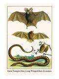 False Vampire Bat, Long Winged Bats and Snakes Reproduction d'art par Albertus Seba