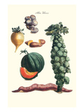 Vegetables; Brussel Sprouts  Yam  Potato  Sweet  Cantelope  Melon  Mushroom