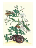 Royal Jasmine with an Amazon Tree Boa and an Ello Sphinx Moth
