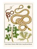 Grass Snake  Pistacia  Milk Vetch  Long Horned Beetle
