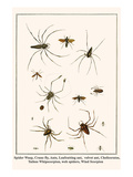Spider Wasp  Crane Fly  Ants  Leafcutting Ant  Velvet Ant  Chelicerates  Tailess Whipscorpion  etc