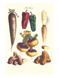 Vegetables; Bell Peppers  Turnips  Potato  Bok Choy and Tubers