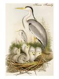 Heron Family