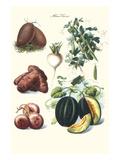 Vegetables; Potato  Melon  Raddish  Peas  Onions