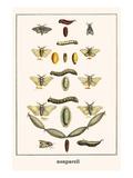 Puss Mouths  Silk Work Moths