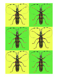 Long Antennae Beetles