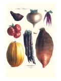 Vegetables; Tomato  Raddish  Sweet  Pumpkin  Carrots  Yam