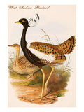 West Indian Bustard