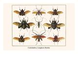 Cockchafers  Longhorn Beetles