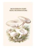 Mousseron Fairy Ring Mushroooms