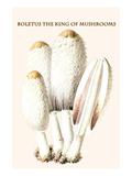 Boletus the King of Mushrooms