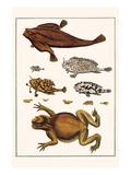 Toad  Longsnout Batfish  Sargassumfishes  Marine Snails