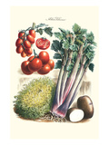 Vegetables; Tomato Varieties  Celery  and Potato