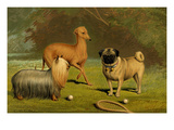 Yorkshire Terrier  Italian Greyhound and Pug
