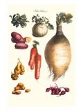 Vegetables; Onion  Potato  Carrot  Roots  Tubers