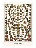 Shells  Snails