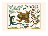 Toad  Lizard  Serpentes  Leopard Frog  Capers