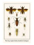 Water Bug  Longhorn Beetles  Katydids and Grashoppers